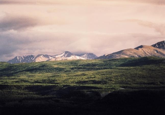 Alaska Denali Scene